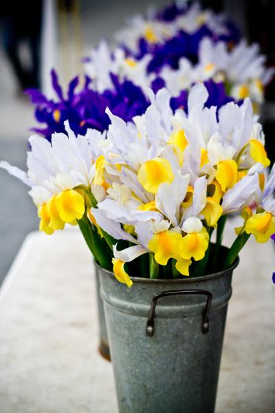 irises at Union Square greenmarket