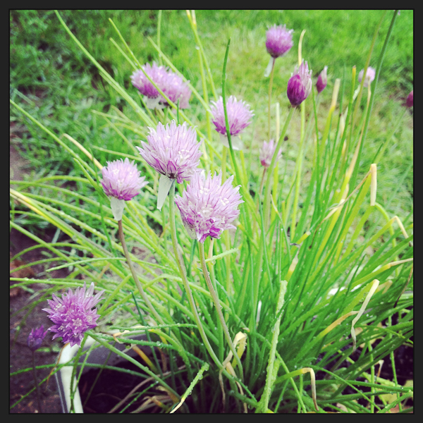 chives poetinthepantry.com