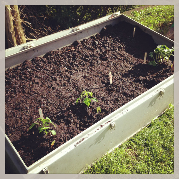 instant raised bed garden