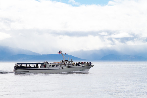 The Mystic Sea tagged along with Island Adventures Whale Watching for much of the action.