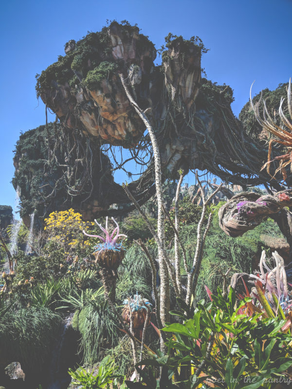 Pandora, Animal Kingdom, Walt Disney World