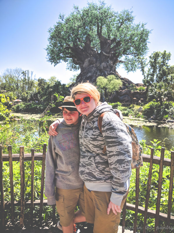Tree of Life, Animal Kingdom, Walt Disney World