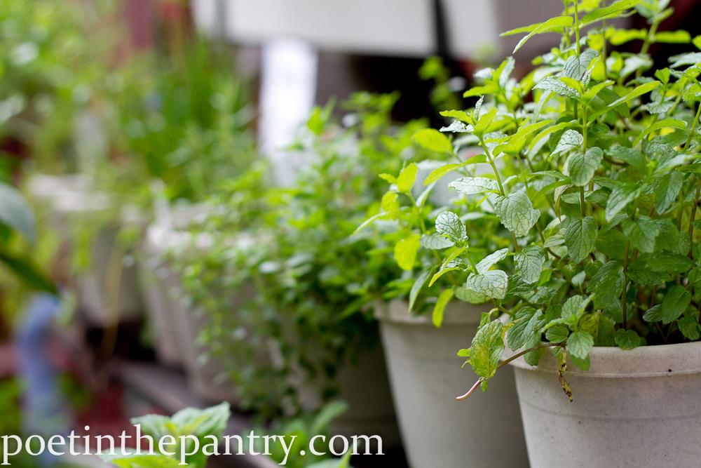 row of herbs