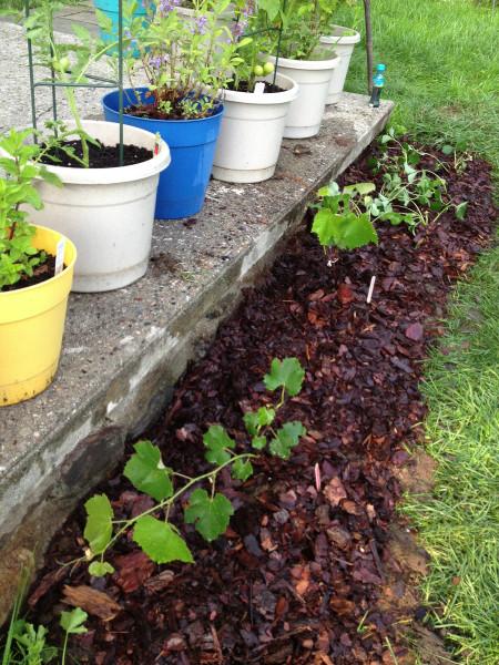 border garden