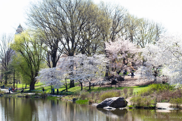 Central Park in bloom - Poet in the Pantry