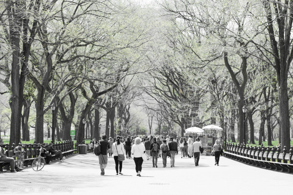 The Mall, Central Park, New York - Poet in the Pantry