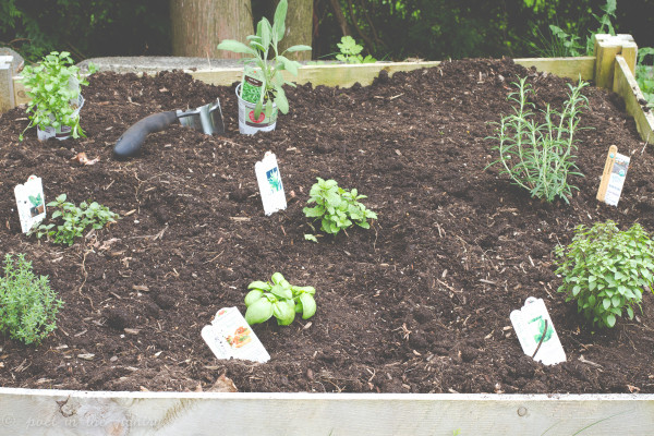gardens are planted, we're ready to go! here's hoping they continue to grow!