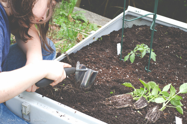 my daughter uses the OXO plow to make planting holes
