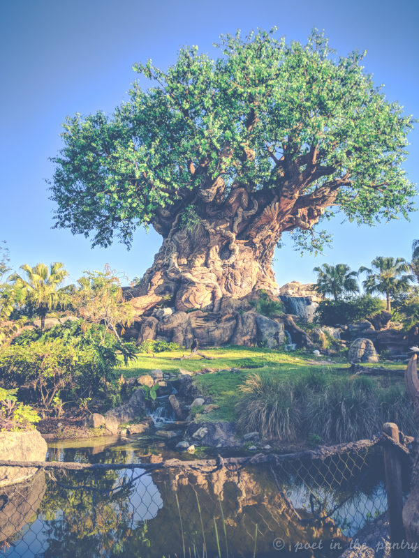 Tree of Life, Animal Kingdom, Walt Disney World