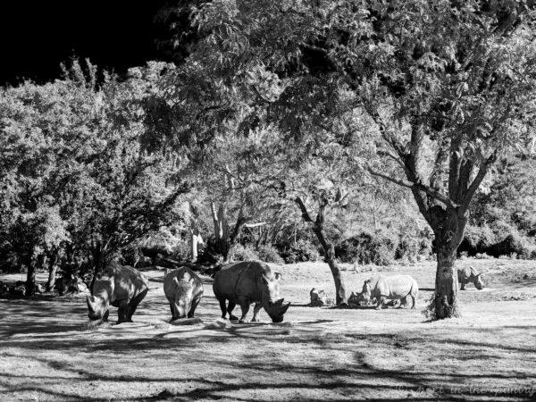 Animal Kingdom Safari, Walt Disney World