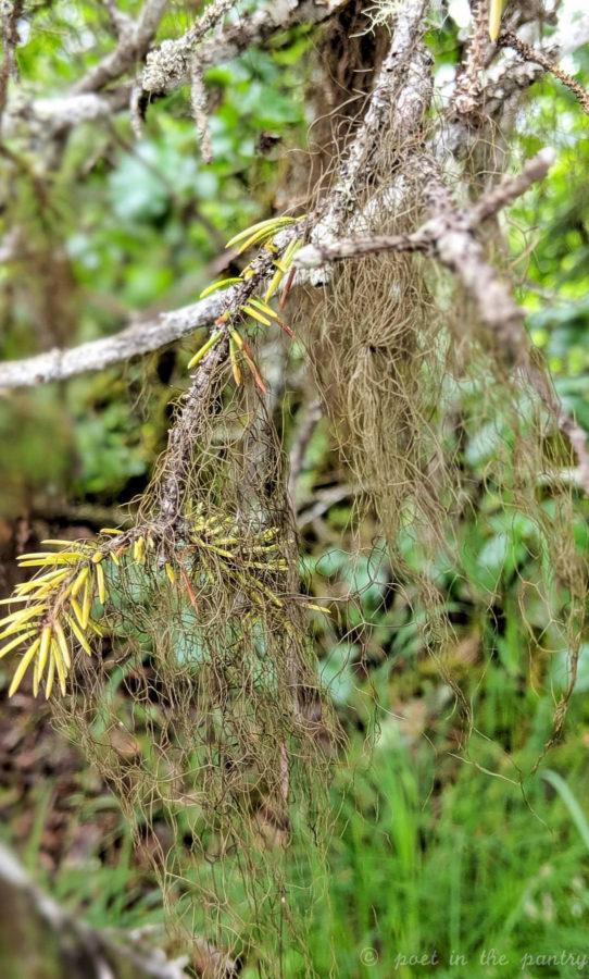 moss on trees at Mendenhall Glacier, Juneau, Alaska