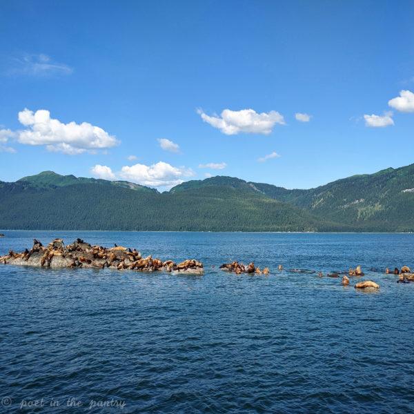 sea lions on the Adventure Bound Alaska Tracy Arm Fjord tour