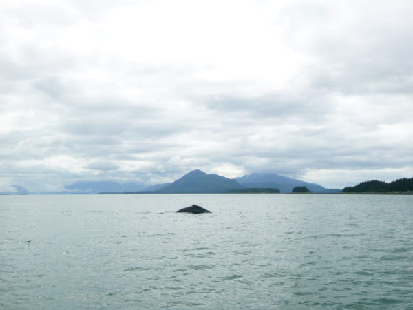 Whale Watch with Juneau Tours & Whale Watch
